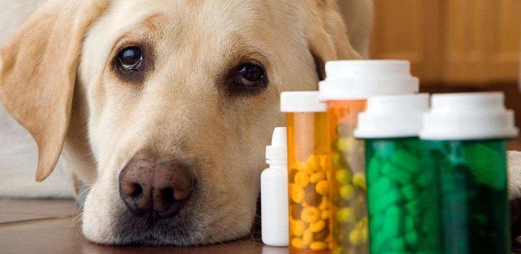 Применение и дозировка таблеток Траумель